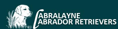 Labralayne Labrador Retrievers